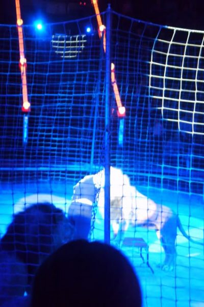 lion tamers head inside a lion at the bolshoi circus