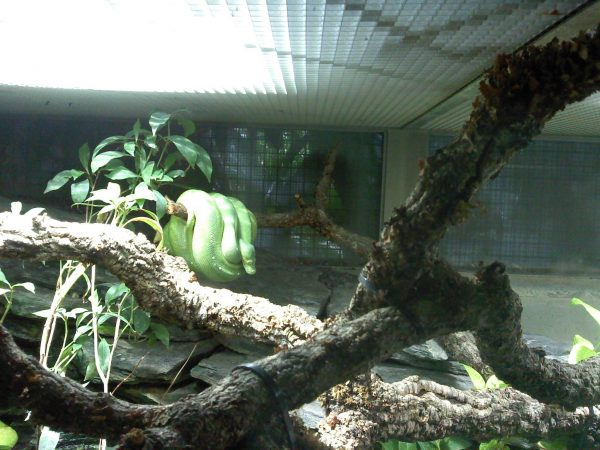 berlin zoo aquarium 2 digital cosmonaut. Black Bedroom Furniture Sets. Home Design Ideas