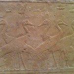 Stork Hieroglyphs