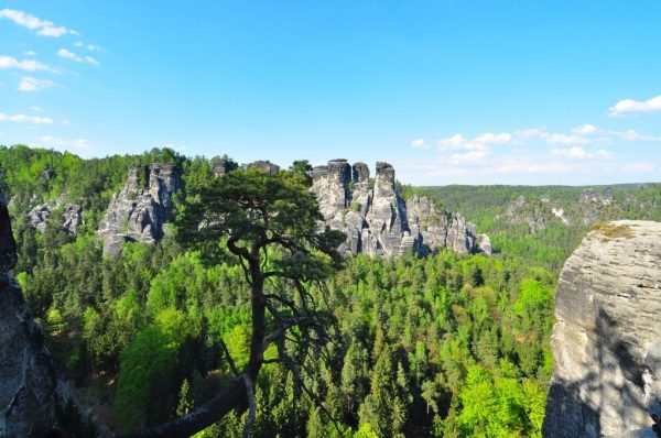 tree growing out of the sandstone mountain