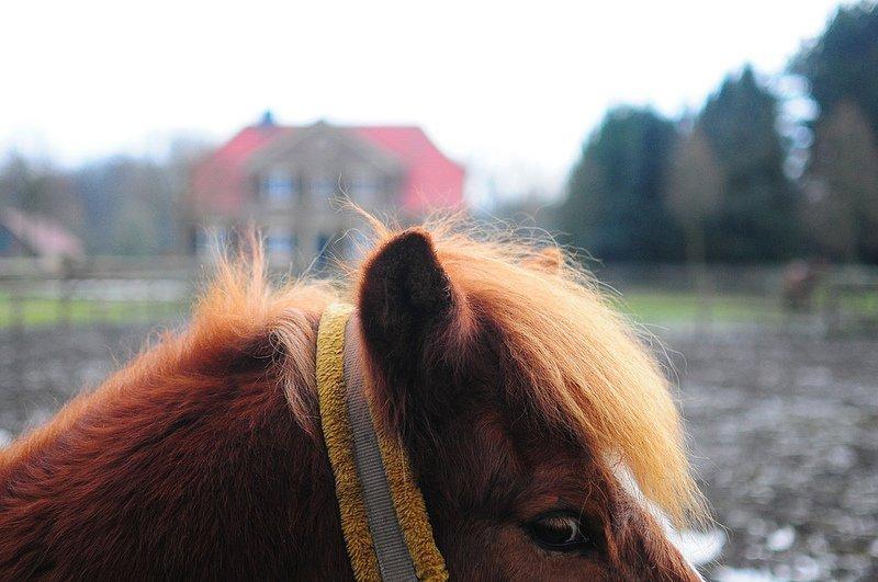 small horse ears