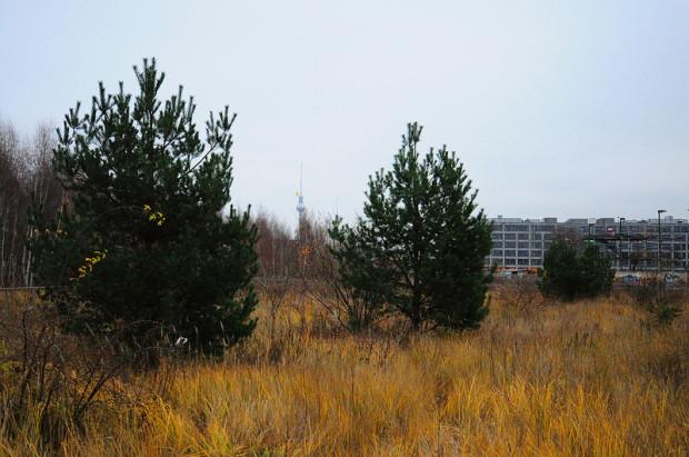 view of the Berlin fernsehturm from the park am nordbahnhof