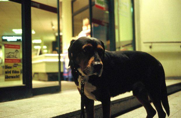 supermarket dog berlin