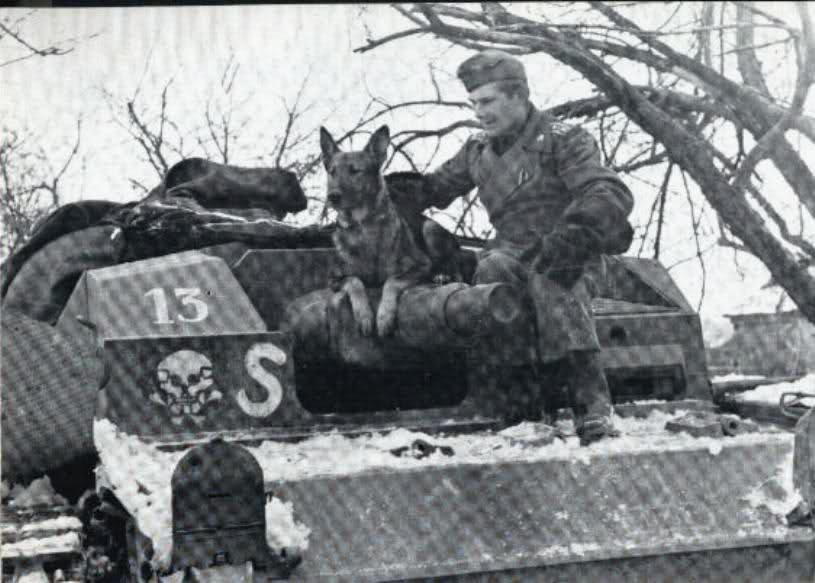 ss panzerdivision mit schaeferhund