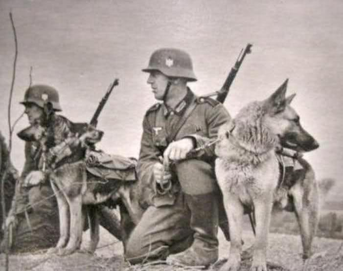 wehrmacht solider with german sheppard dogs