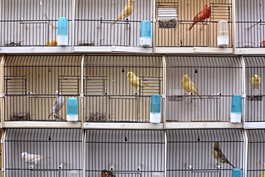 paris bird market france Marche aux Oiseaux