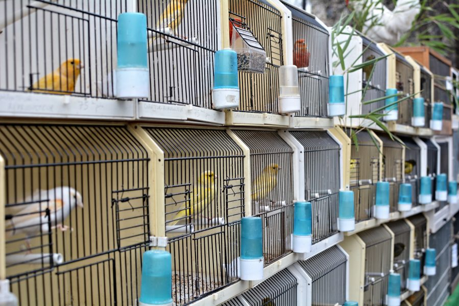 paris bird market france a row of caged birds Marche aux Oiseaux