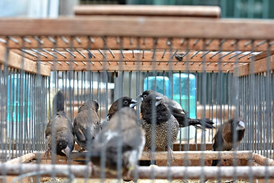 paris bird market france caged birds Marche aux Oiseaux