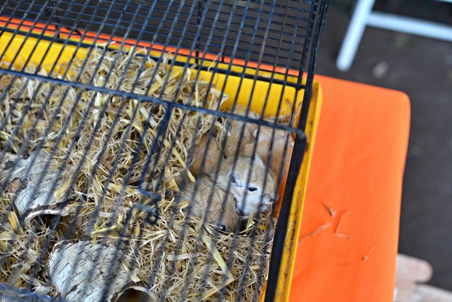 paris bird market france caged hamsters Marche aux Oiseaux