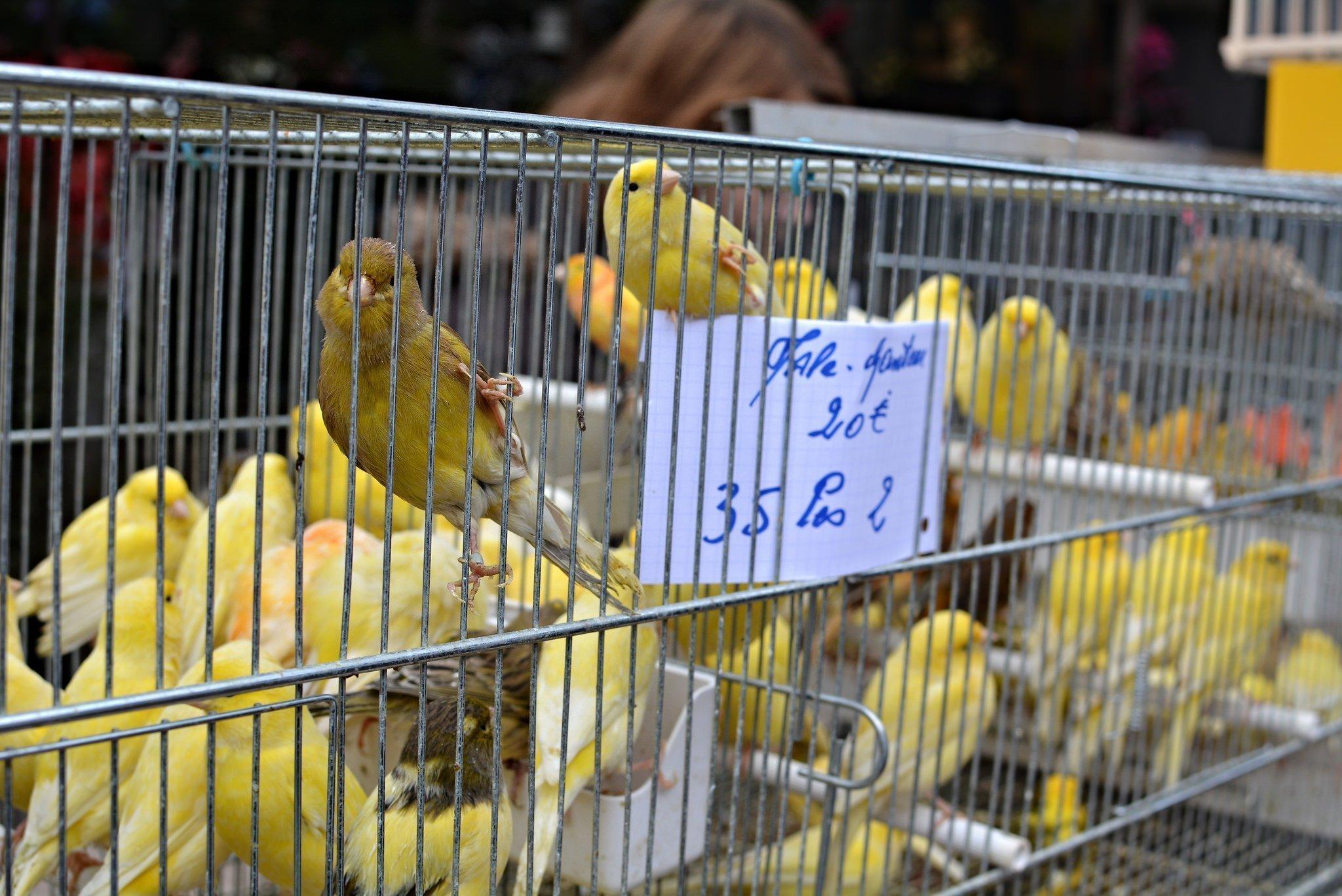 The paris bird market digital cosmonaut for Oiseaux de france
