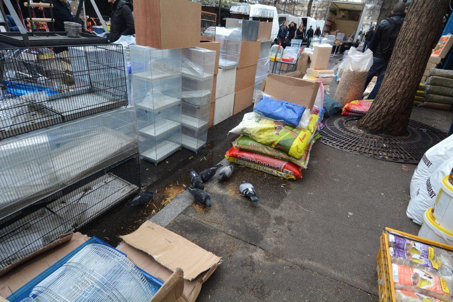 paris bird market france street pigeons Marche aux Oiseaux