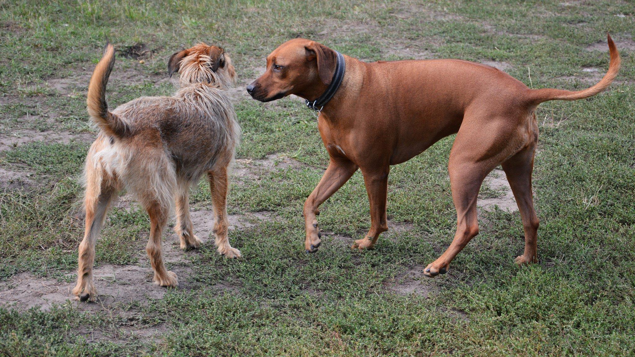hunde pankow berlin
