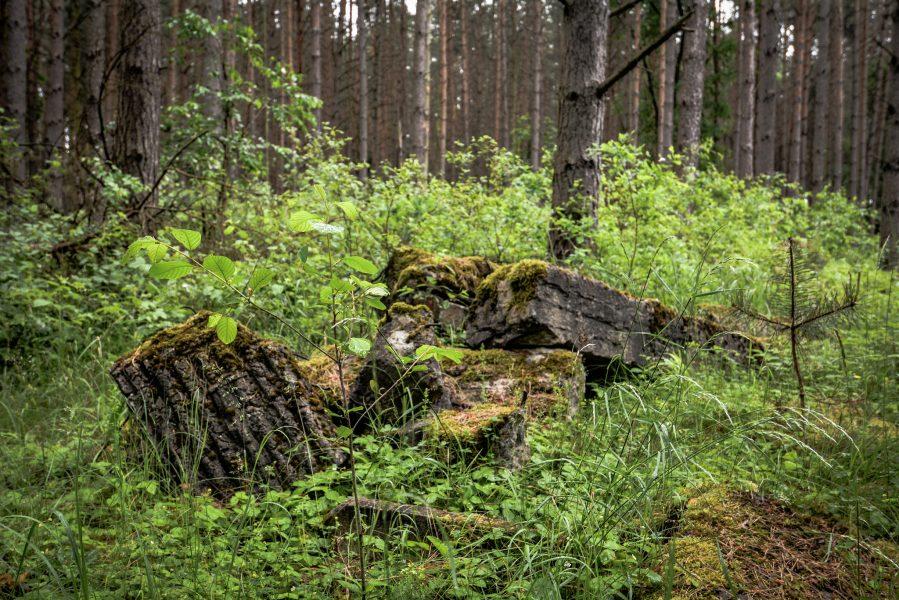 beton ruinen weisse haeuser rechlin mecklenburg urbex lost places
