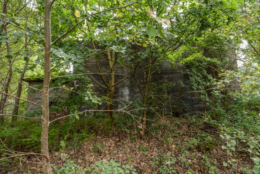 brush trees side view versuchsstelle fuer hoehenfluege nazi bunker WWII abandoned lost places urbex oranienburg brandenburg germany