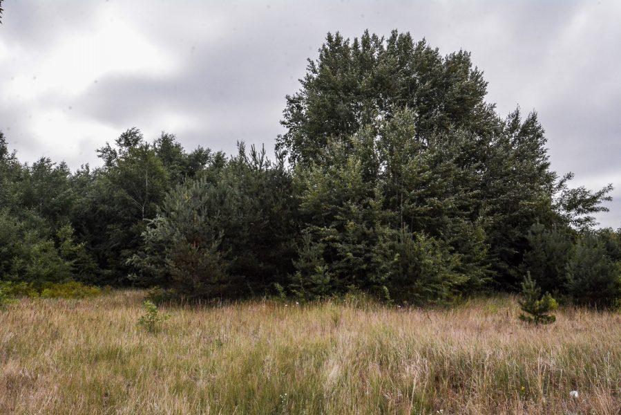 trees versuchsstelle fuer hoehenfluege nazi bunker WWII abandoned lost places urbex oranienburg brandenburg germany