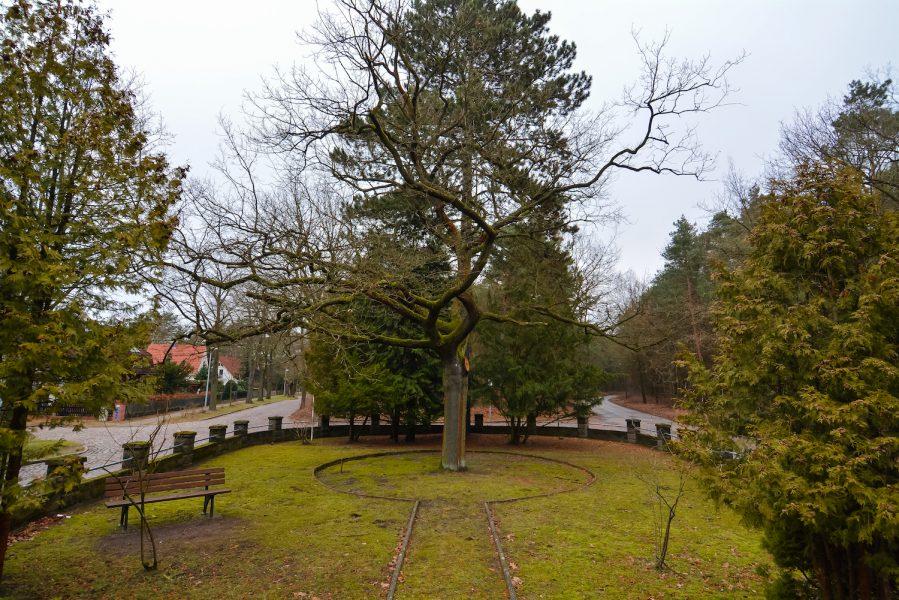 tree schöneiche berlin sowjetisches ehrenmal platz der befreiung 8 may soviet war memorial