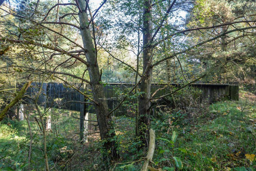 ss schiesstand sachsenhausen oraninenburg brandenburg lost places urbex abandoned germany kugelfang bullet catcher trees