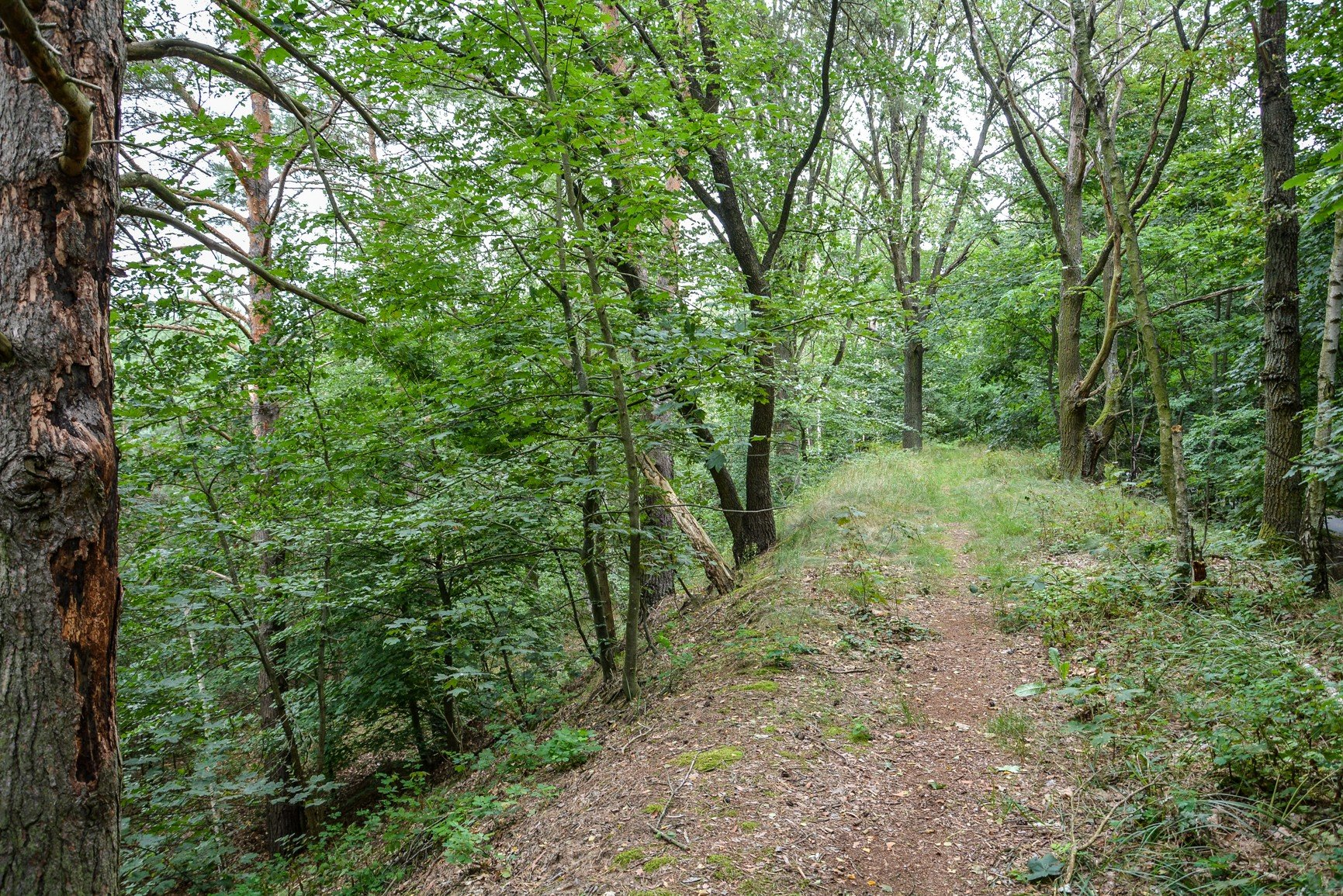 avus südkurve hügel hill berlin charlottenburg lost places urbex abandoned berlin