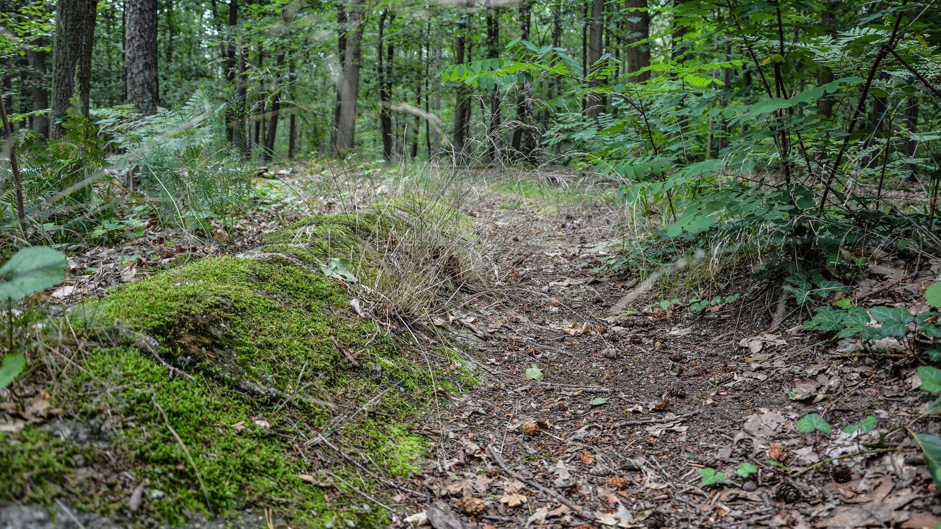 moss avus südkurve modell berlin charlottenburg lost places urbex abandoned berlin