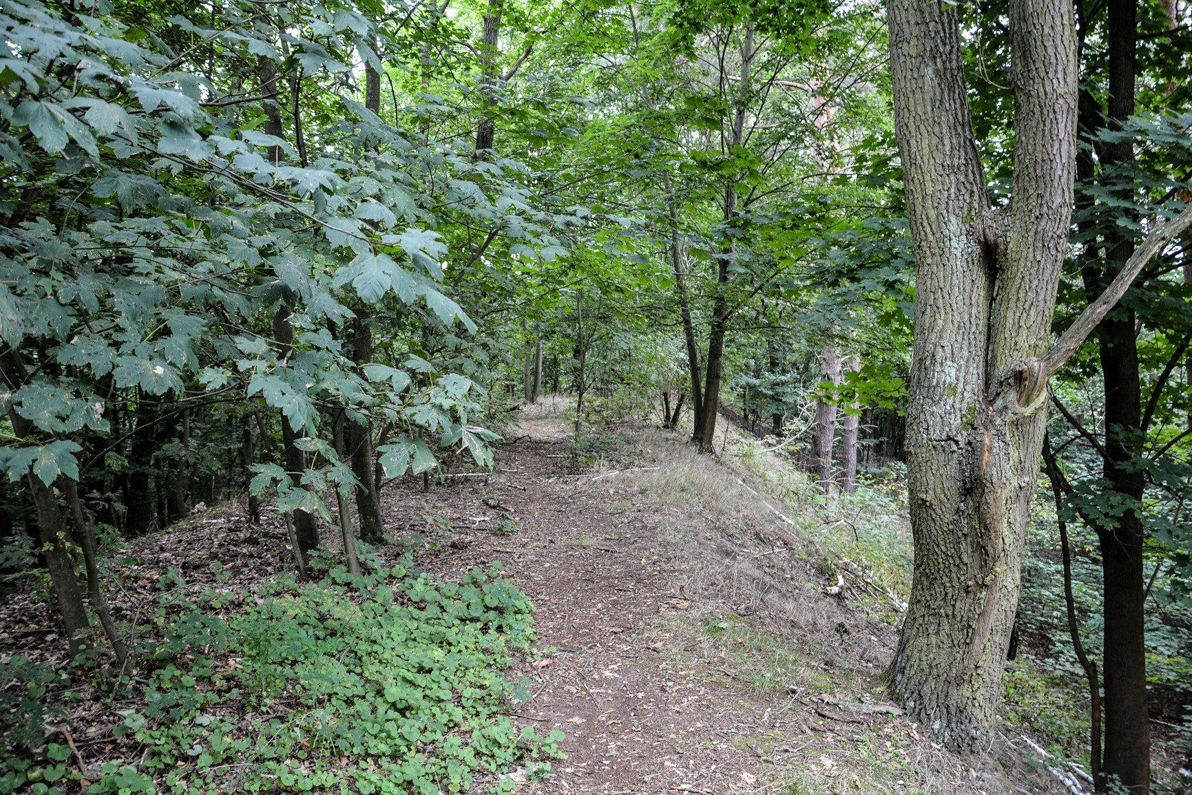 pfad pathway avus südkurve huegel hill berlin charlottenburg lost places urbex abandoned berlin