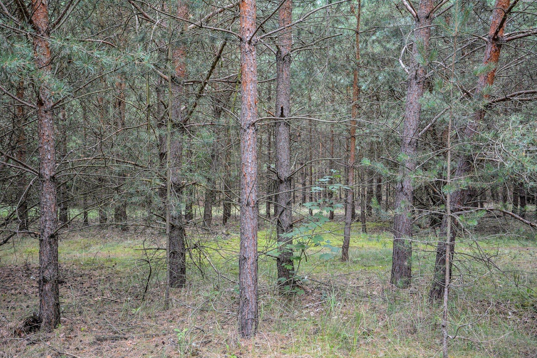 trees keerans range avus südkurve hügel hill berlin charlottenburg lost places urbex abandoned berlin